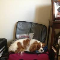 11 cachorros que estão tristes por não estarem saindo de férias!