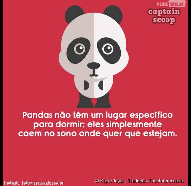 Algumas pessoas são como os pandas, né?