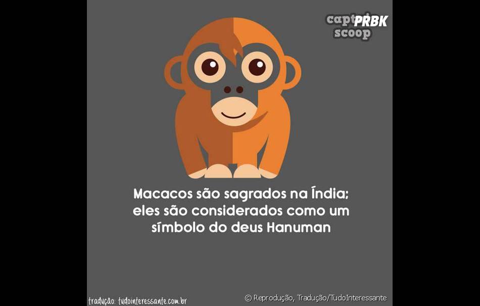 Os macacos deviam se mudar para Índia, parece que eles se dariam melhor por lá...