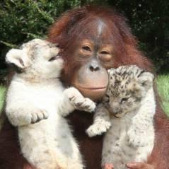 Amor, gentileza, fidelidade e outros 10 comportamentos super fofos dos animais!