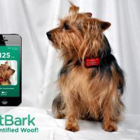 FitBark: app ajuda acompanhar seu cachorro a distância
