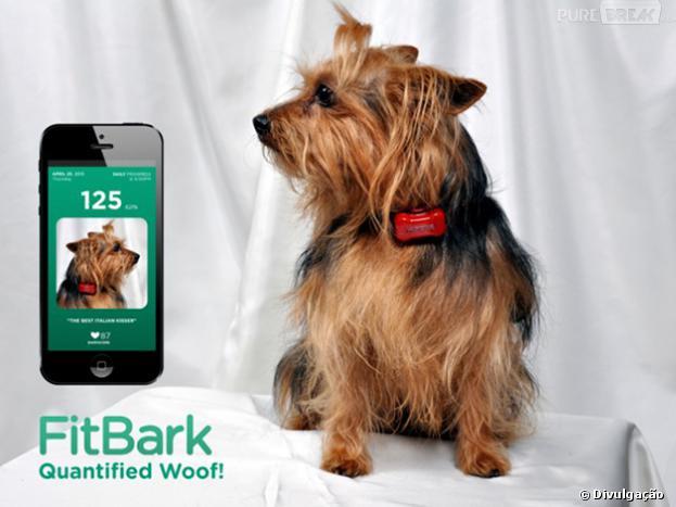 FitBark é um aparelho que permite ficar de olho na saúde do seu pet