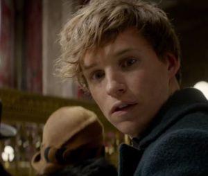 """Várias prévias de """"Animais Fantásticos e Onde Habitam"""", spin-off de """"Harry Potter"""", já foram liberadas"""