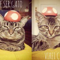 """Gatinhos em """"Assassin's Creed"""" e """"Super Mario"""": a fofura não tem limites!"""
