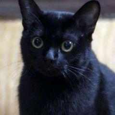 """Gato León sai de """"O Sétimo Guardião"""" e os espectadores não ficaram tão felizes com isso"""