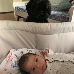 Clara Maria, filha de Rafa Vitti e Tatá Werneck, já tem um melhor amigo: Gato, o cachorro da família