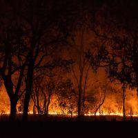 Entenda por que você deve se preocupar com o que está acontecendo no Pantanal