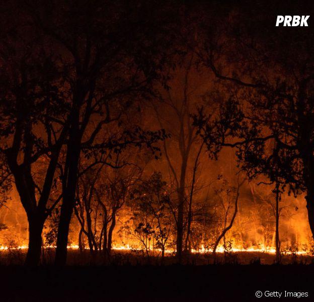 Incêndios no Pantanal: entenda o que está acontecendo e por que você deve se preocupar