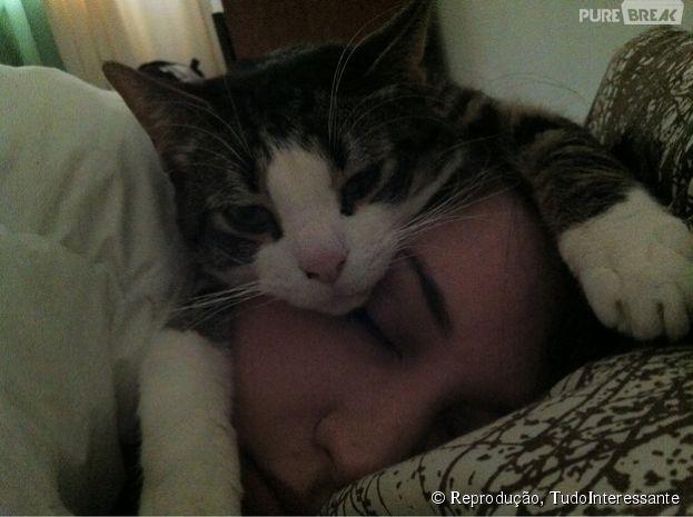 Os gatos não sabem quando estão sendos inconvenientes
