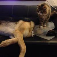 12 gatos valentes que provam não ter medo de cachorro nenhum!