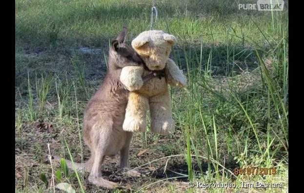 É uma pena que não dá pra se vestir de canguru e adotar esse pequeno