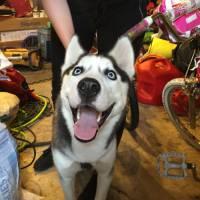 É apaixonado por cães? Confira 21 fotos mais felizes do melhor amigo do homem!