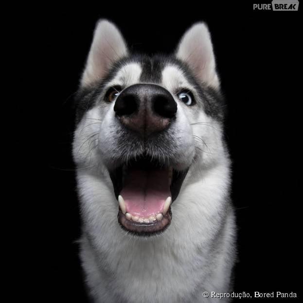 Olha o tamanho do sorriso desse cachorro! Nem você consegue imitar um igual!