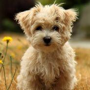 10 motivos que comprovam porque ter um cachorro é uma das melhores coisas da vida!