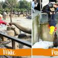 Levar o filho ao zoológico pode ser um passeio ou uma aventura. Depende de quem vai te levar...