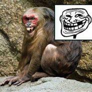 Zoeira no mundo animal: 15 GIFs dos animais mais trolls do mundo