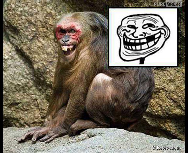 O macaco mais troll do mundo!