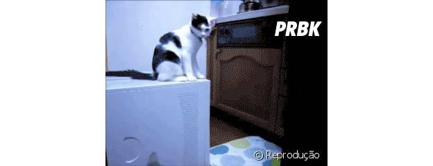 Até os gatos entraram no clima da zoeira!