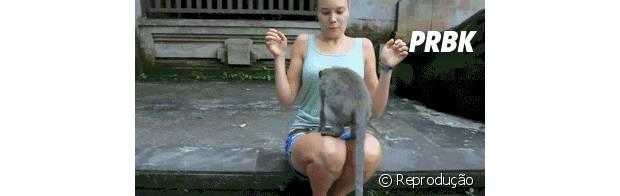 Esse macaco não tem pudores!