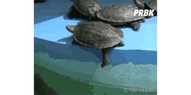 """Tartaruga dá um """"empurrãozinho"""" na amiga."""