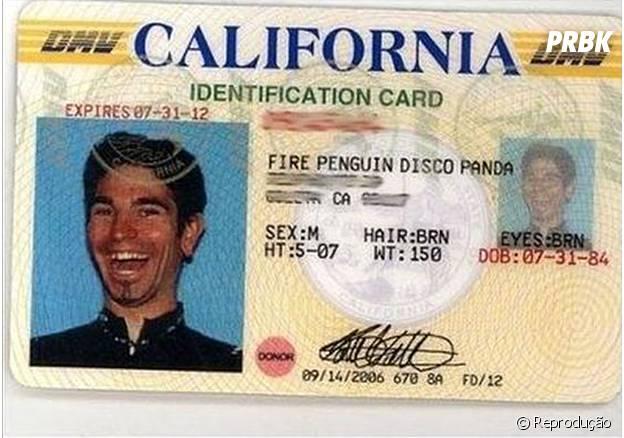 Fire Penguin Disco Panda, só podia ser da Califórnia...