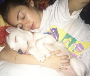 """Milky é apenas um dos muitos animais de estimação da """"mãe de pet"""" Miley Cyrus"""