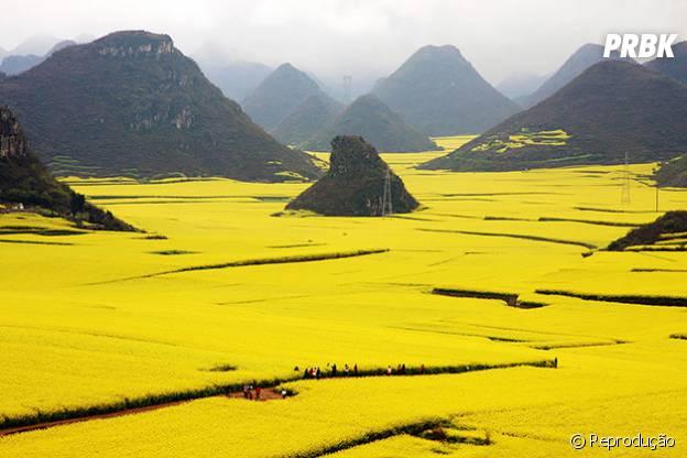 A china e seus belos campos de plantação de Canola