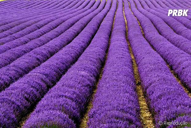 Campos da região de Provence, na França