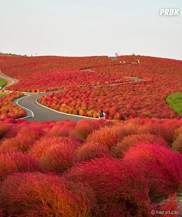 Paraíso de flores no Japão!