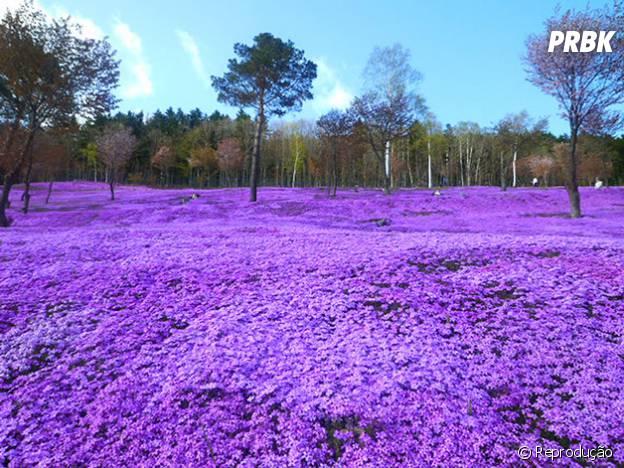 O parque das flores Japonês
