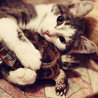 Conheça alguns gatos que fizeram amizade com animais bem diferentes!