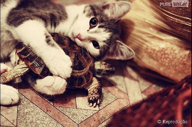 Um gatinho e uma tartaruga que são melhores amigos!