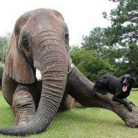 33 animais que você nunca imaginou que poderiam ser amigos!