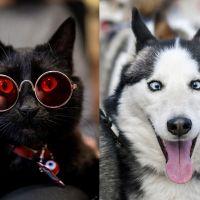 Este teste sobre novelas vai te ajudar a decidir se você deve adotar um gato ou um cachorro