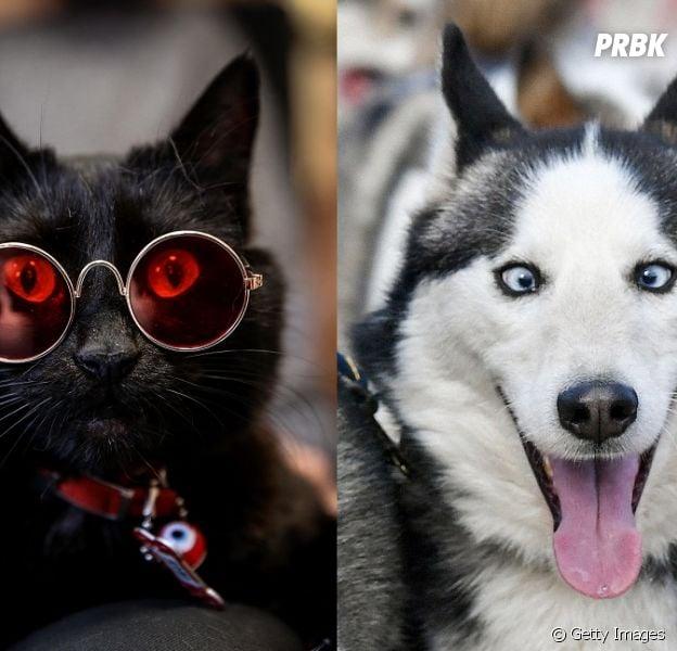 Gato ou cachorro? Esse teste vai ajudar vocês na hora de adotar um bichinho!