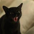 """A gatinha Lucky brilhou na pele de León em """"O Sétimo Guardião"""""""