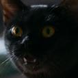 """Em """"As Five"""", o papel da gatinha Lucky vai ser bem diferente do León de """"O Sétimo Guardião""""!"""
