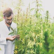 Legalização da maconha para uso medicinal: thread no Twitter explica tudo que você precisa saber