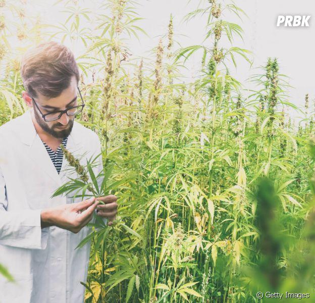 Legalização da Maconha para uso medicinal agora é permitida no Brasil. Entenda