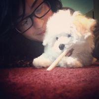 Demi Lovato ganha cachorrinho de Natal e morre de amores pelo pet no Instagram!