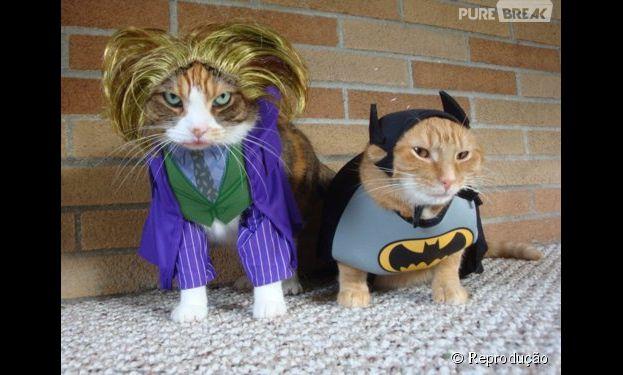 23 gatinhos com fantasias geek pra inspirar o carnaval do seu pet