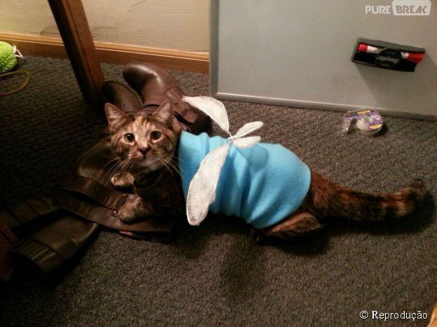 """<p>Navi-Cat, a fada que sempre acompanha Link em """"The Legend Of Zelda""""</p>"""