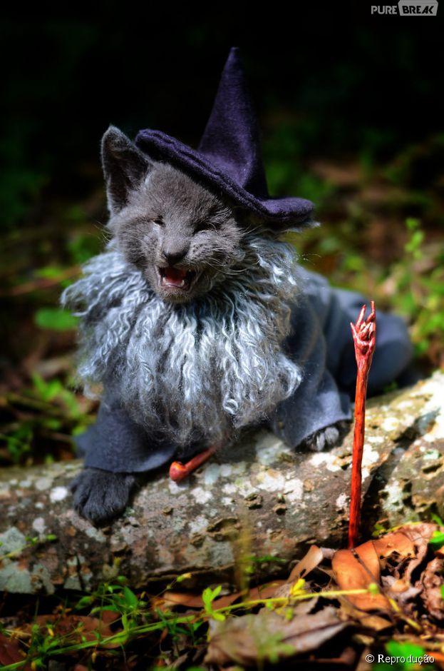 """<p>O mago Gandalf de """"Senhor dos Anéis"""" foi a inspiração para esta foto</p>"""