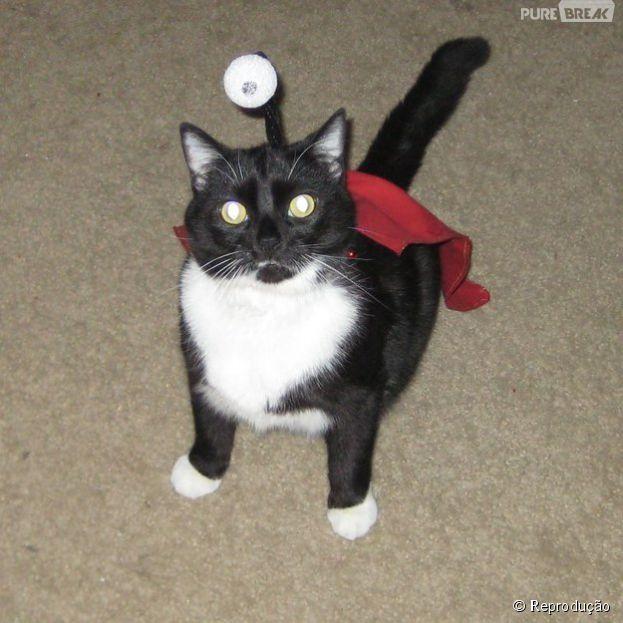 """<p>Os donos desse gato devem amar a série de TV """"Futurama"""", pois escolheram o personagem Nibbler</p>"""