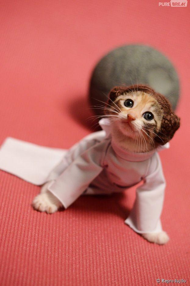 """<p>Uma gatinha ronronando dentro de sua roupa de Princesa Leia, de """"Star Wars""""</p>"""