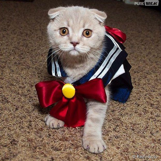 <p>Sailor Moon virou uma gatinha também</p>