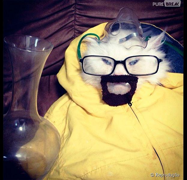 """<p>Esse gato não está o perigo, ele é o perigo, como diria o camarada Walter White, do seriado """"Breaking Bad"""". Essa fantasia ficou sensacional</p>"""