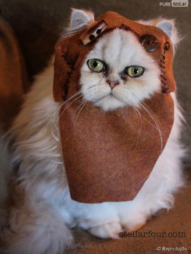 """<p>Um Ewok de Endor saiu da galáxia de """"Star Wars"""" e ganhou uma versão felina</p>"""