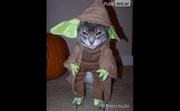 """<p>Um gatinho vestido de mestre Yoda de """"Star Wars""""</p>"""