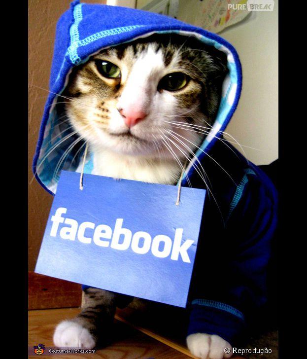 <p>Um gato geek de verdade, tem que vestir a camisa das redes sociais</p>
